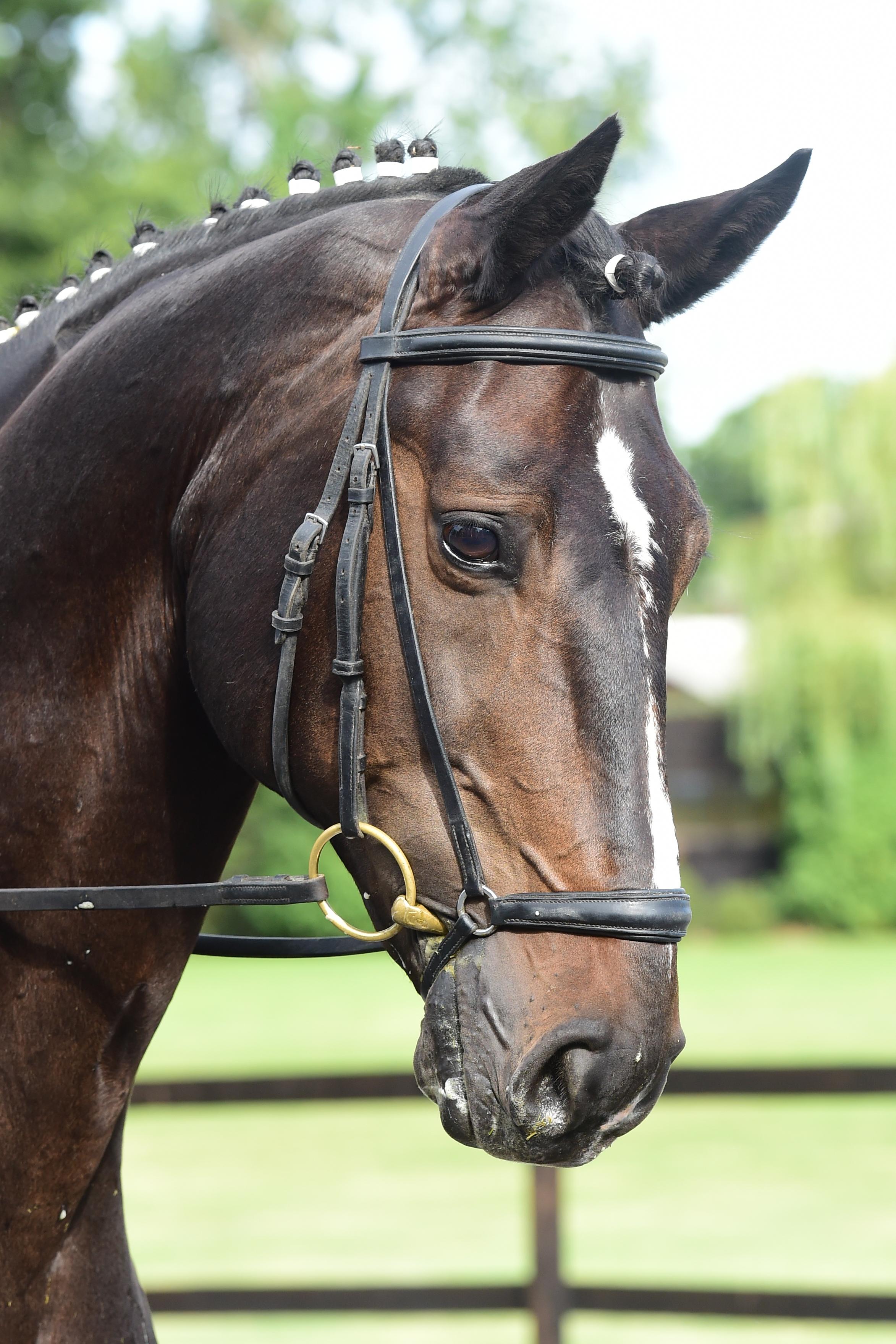oldencraig equestrian centre