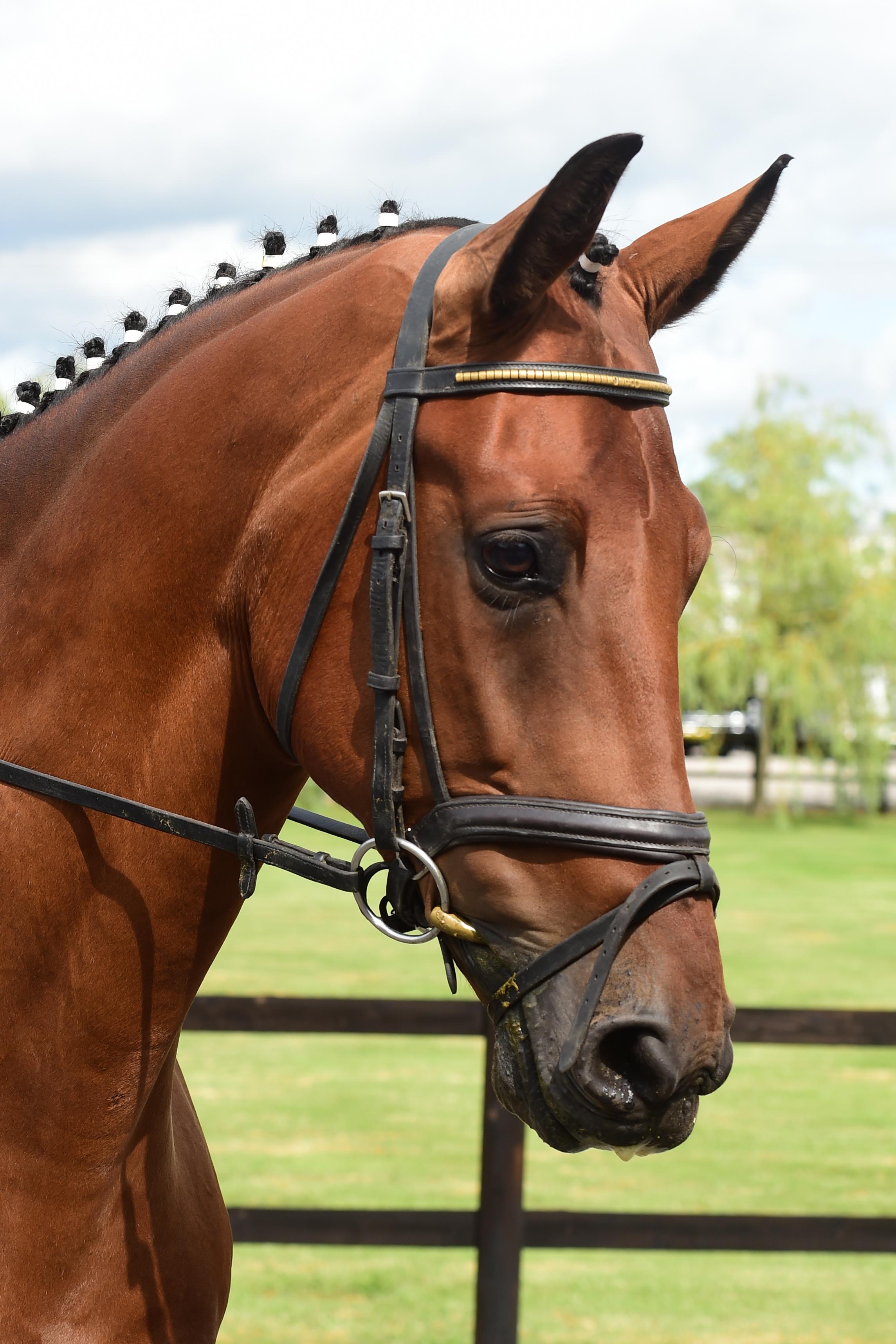 Oldencraig Equestrian Centre Dressage Surrey Livery